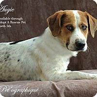 Adopt A Pet :: Augie - Las Vegas, NV