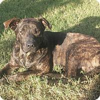 Adopt A Pet :: Tanner - El Campo, TX