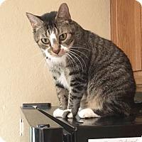 Adopt A Pet :: Milo - Arlington/Ft Worth, TX