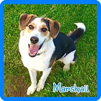 Adopt A Pet :: Marshall - Jasper, IN