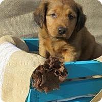 Adopt A Pet :: Drake - Joliet, IL