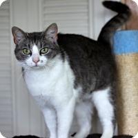 Adopt A Pet :: Kiki - Dalton, GA