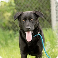 Adopt A Pet :: Loki - Valley Falls, KS