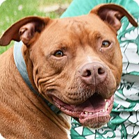 Adopt A Pet :: Flint - Huntley, IL