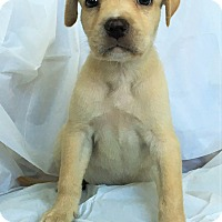 Adopt A Pet :: Charlotte - Mooresville, NC