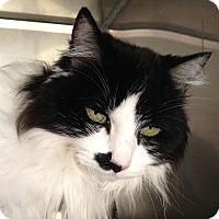 Adopt A Pet :: Sadie - Port Angeles, WA