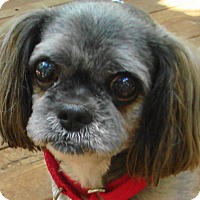 Adopt A Pet :: Pepper - St Louis, MO