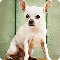 Adopt A Pet :: Ziggy - Terre Haute, IN