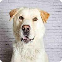 Adopt A Pet :: PINKI - Murray, UT