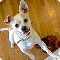 Adopt A Pet :: Chiquita - Los Angeles, CA