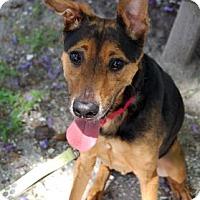 Adopt A Pet :: Zooey - Bradenton, FL