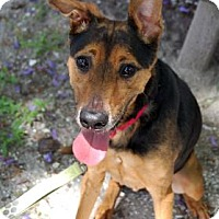 Hound (Unknown Type) Mix Dog for adoption in Bradenton, Florida - Zooey