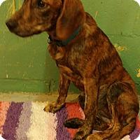 """Adopt A Pet :: """"Friends litter"""" - Walden, NY"""