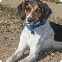 Adopt A Pet :: Porter - Elmwood Park, NJ