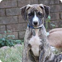 Adopt A Pet :: Ryder - Marietta, GA