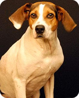 Hound (Unknown Type) Mix Dog for adoption in Newland, North Carolina - Page