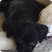 Adopt A Pet :: BOBBIE - Waretown, NJ