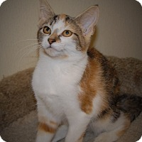 Adopt A Pet :: Rajah - Wilmington, OH
