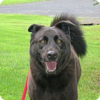 Adopt A Pet :: Charlie - Stroudsburg, PA