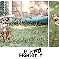Adopt A Pet :: Sir Henry - South Park, PA