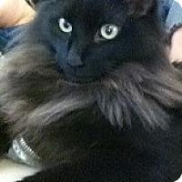 Adopt A Pet :: Osiris - Sacramento, CA