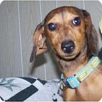 Adopt A Pet :: Panda - Antioch, IL