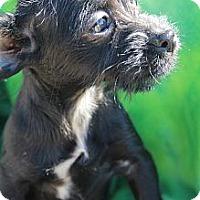 Adopt A Pet :: Aretha - Wytheville, VA