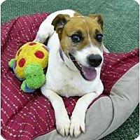 Adopt A Pet :: Crackerjack - Mocksville, NC