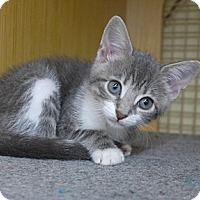 Adopt A Pet :: Mae - Lighthouse Point, FL