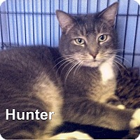 Adopt A Pet :: Tab Hunter - Medway, MA