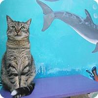 Adopt A Pet :: Cotton - Newport Beach, CA