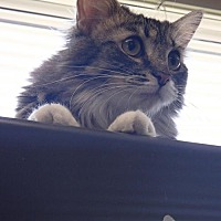 Adopt A Pet :: Mary Hatchet - Lima, OH
