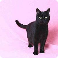 Adopt A Pet :: OLIVIA - San Martin, CA