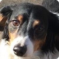 Adopt A Pet :: Chispa - MINNEAPOLIS, KS