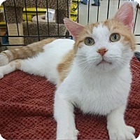 Adopt A Pet :: Tony the Tripod - MARENGO, IL