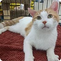 Adopt A Pet :: Tony the Tripod - MARENGO, IL