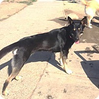 Adopt A Pet :: Tina - Pleasant Grove, CA