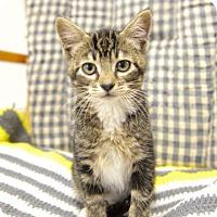 Adopt A Pet :: Aria - Sheridan, WY