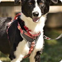 Adopt A Pet :: Elsa - Allen, TX