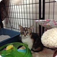 Adopt A Pet :: Bling - Tehachapi, CA