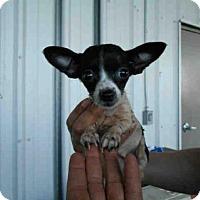 Adopt A Pet :: A571396 - Oroville, CA