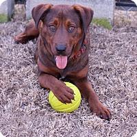 Adopt A Pet :: Emily E. - Pinehurst, NC
