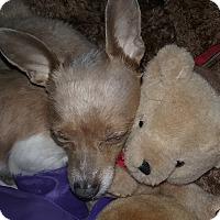 Adopt A Pet :: Rugby - Encino, CA