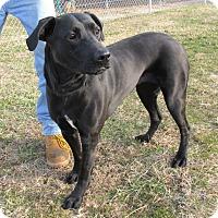 Adopt A Pet :: Piper - Reeds Spring, MO