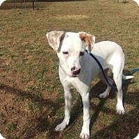 Adopt A Pet :: Loki - Front Royal, VA