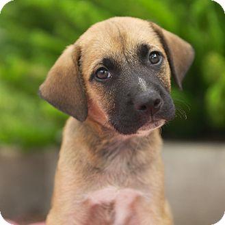 Cur Dog Rescue Texas