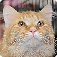 Adopt A Pet :: Elliotte - Harrisburg, NC