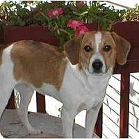 Adopt A Pet :: Mickey - Albany, NY