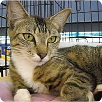 Adopt A Pet :: Cecline - Riverside, RI