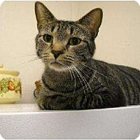 Adopt A Pet :: Tom - Metairie, LA